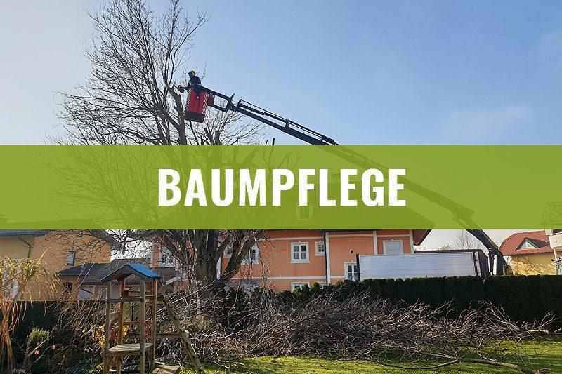 baumpflege-2